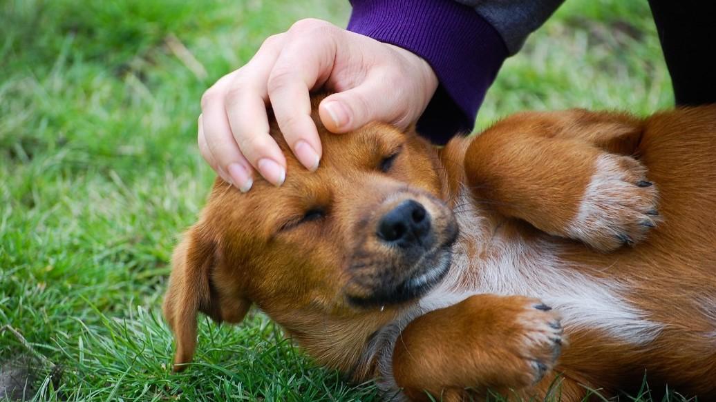 Hils endelig på din hund. I bliver glade begge to