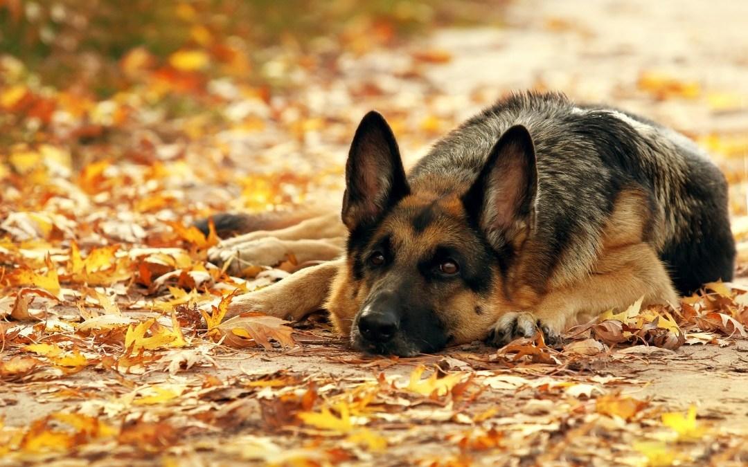 Din hund kan høre, om du er glad
