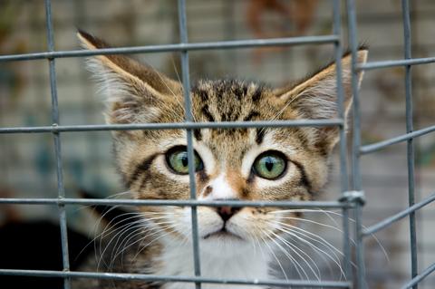 Kat bag hegn
