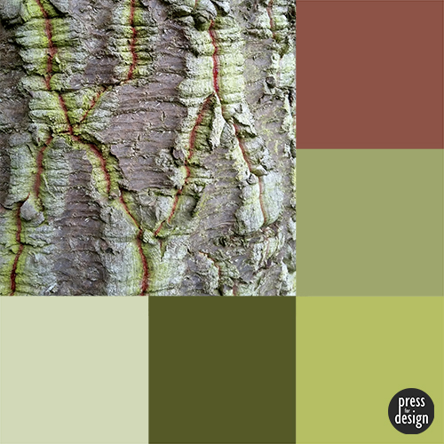 Tuesday Colour Inspiration: Araucaria bark