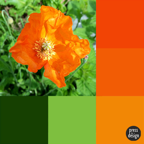 Tuesday Colour Inspiration: California Poppy