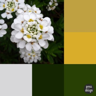 Tuesday Colour Inspiration: Candytuft
