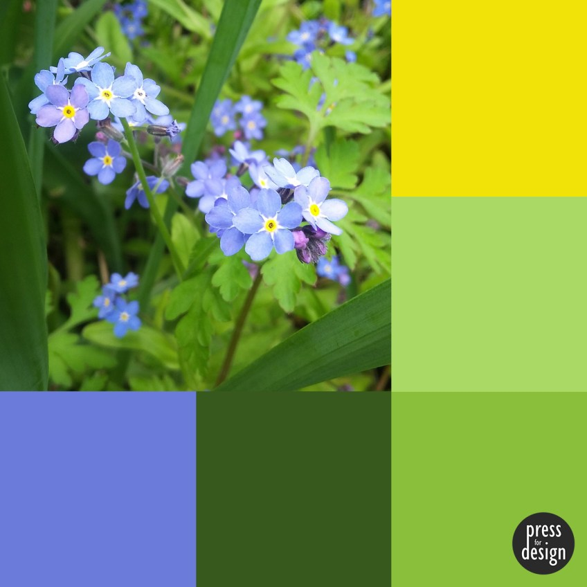 Tuesday Colour Inspiration: Forget Me Nots