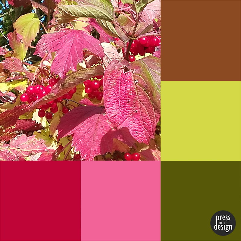 Tuesday Colour Inspiration – Guelder Rose