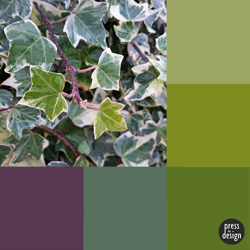 Ivy colour inspiration swatch