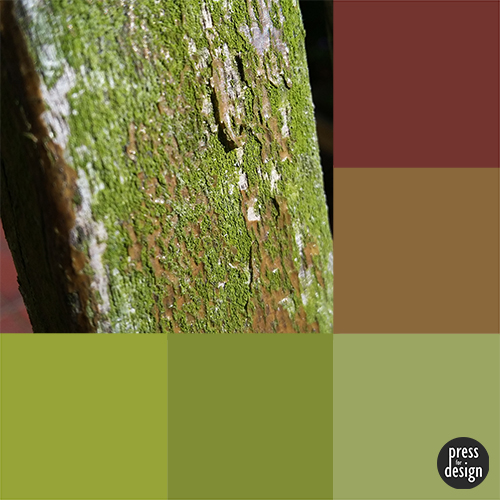 Tuesday Colour Inspiration – Moss