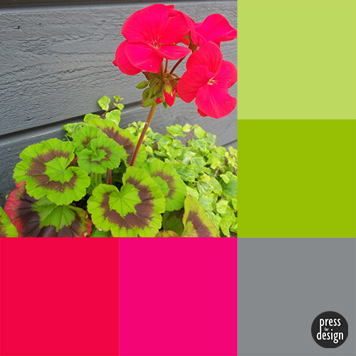 Tuesday Colour Inspiration: Pelargonium