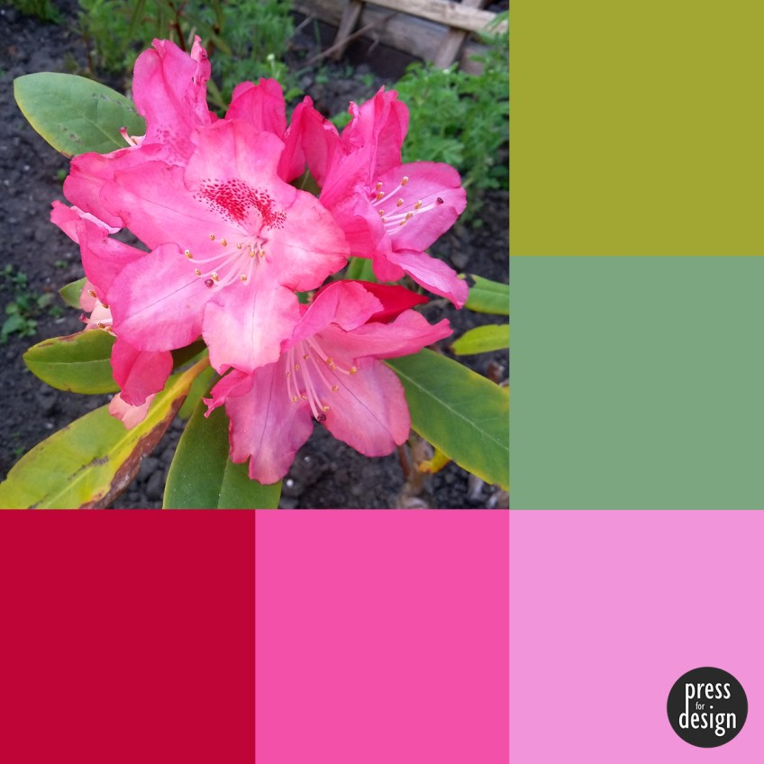 Tuesday Colour Inspiration: Rhododendron
