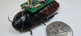 Türk bilimadamından hayat kurtaracak biobot buluşu!