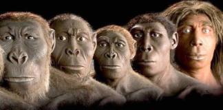 insan evrimi, ene, ene nedir, hamdi şekeroğlu, evrim,