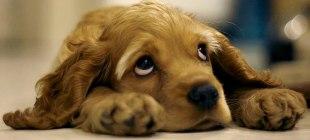 Köpek maması seçiminde yaşın önemi nedir?