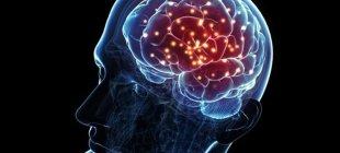 Doksanlı yaşlarda yeni beyin hücreleri ürettiğimiz saptandı