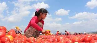 18 bini istismara uğradı, 2 milyon çocuk çalıştırılıyor: Çocuklar güvende değil