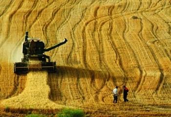 Türkiye tarım alanlarını kaybediyor: Arpa ve buğday ithalatına milyarlarca lira para ödendi