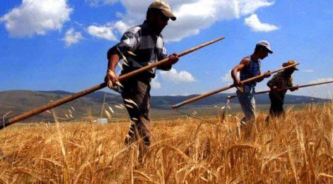 Çetin Ünsalan Yazdı: 'Tarımı toprak kurtarmaz'