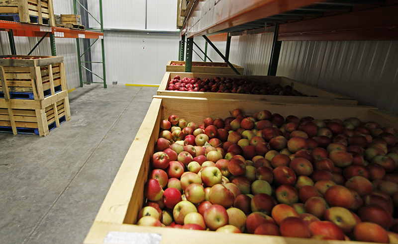 Crates of Maine-grown apples sit in one of the new refrigerated storage rooms at the Good Shepherd Food Bank in Auburn. Photo by Jill Brady/Staff Photographer