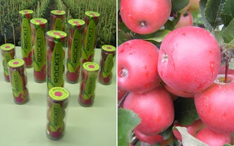 In Italia sugli scaffali arriva la mini-mela che si vende solo in tubo