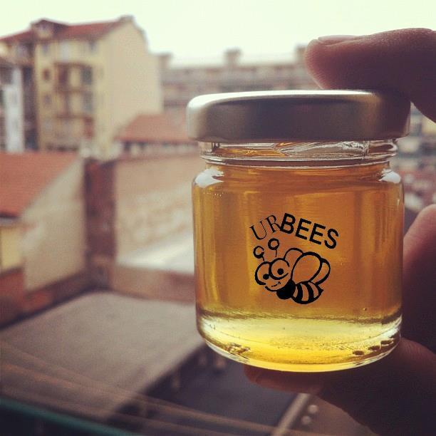 Allevare le api e produrre miele in città