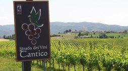 La strada dei vini del Cantico