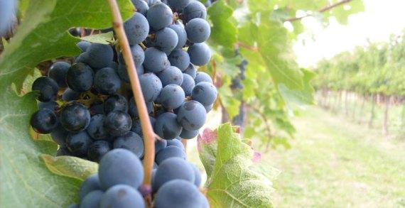 La quarta rivoluzione industriale alla conquista del vino!