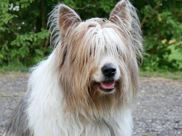È un cane il co-protagonista di Clic, il primo selfiefilm della storia del cinema