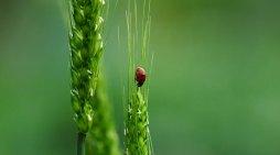 Alimenti: biodiversità in calo, in pericolo il futuro del cibo e dell'ambiente