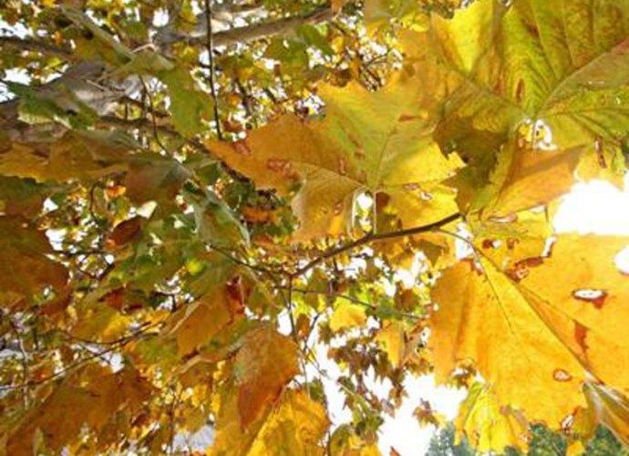 Giornata-alberi-parchi-assorbono-145-mln-t-di-CO2-all'anno-copertina