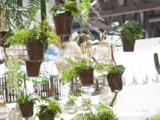 Giardinaggio Myplant-1