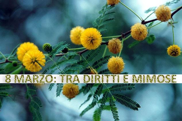 8 Marzo: tra diritti e mimose. Ci vorrà ancora un secolo per raggiungere la parità. A cura della dr.ssa Letizia di Lauro - Criminologa