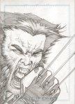 Wolverine-SketchCard_01