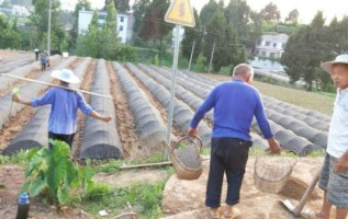 PFGHL Harvests The First Batch of Premium Dry Cocoons in Self-Constructed Organic Sericulture Bases 11