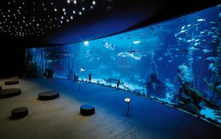 Deep Sea in the grand aquarium Poema del Mar – an exhibition with the largest curved window in the world 2