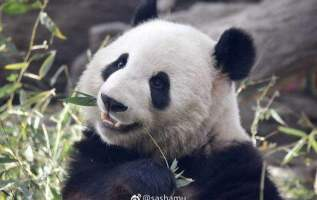 The Most Complete Panda Seeing Map for Chengdu, Guiding Tourists to Visit Chengdu Comfortably 12