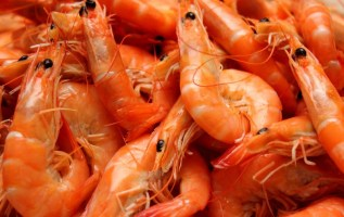 China Shrimp Market Expected to Reach 2 Million Tons by 2023 – IMARC Group 3