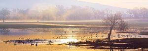 gary-cedar-photography-wetlands-3
