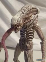 NECA Aliens S9 Albino Drone Xenomorph Review