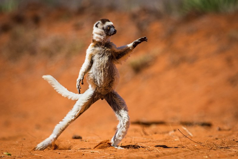 The Comedy Wildlife Photography Awards.