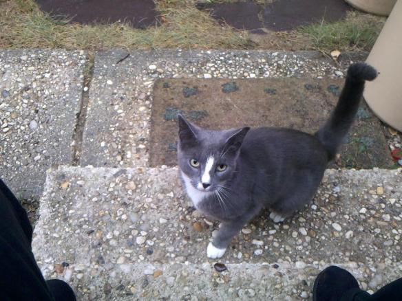 PAWS- Mama Cat