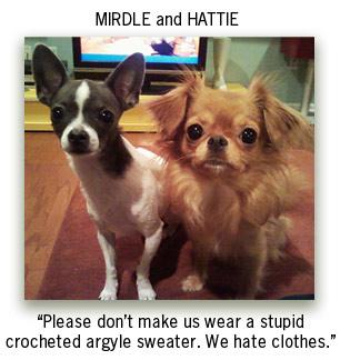 Mirdle-Hattie-Chihuahuas