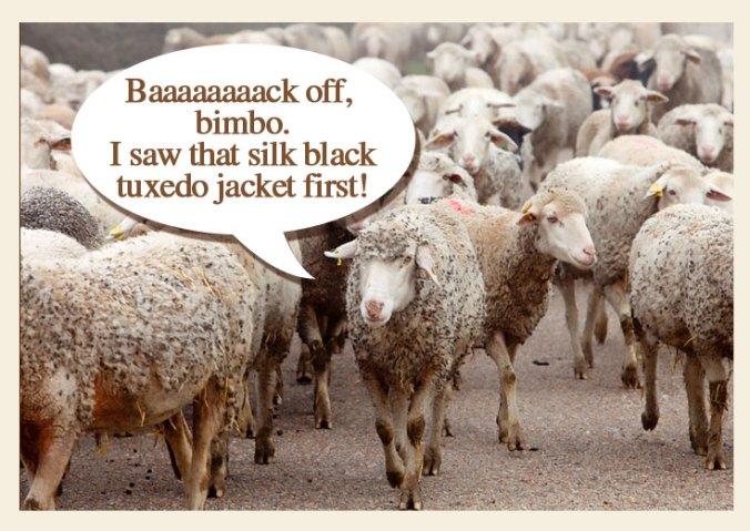 sheep at H&M lines at NJ for Isabel Mirant