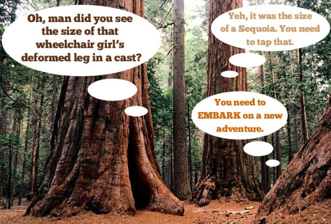 sequoias in conversation