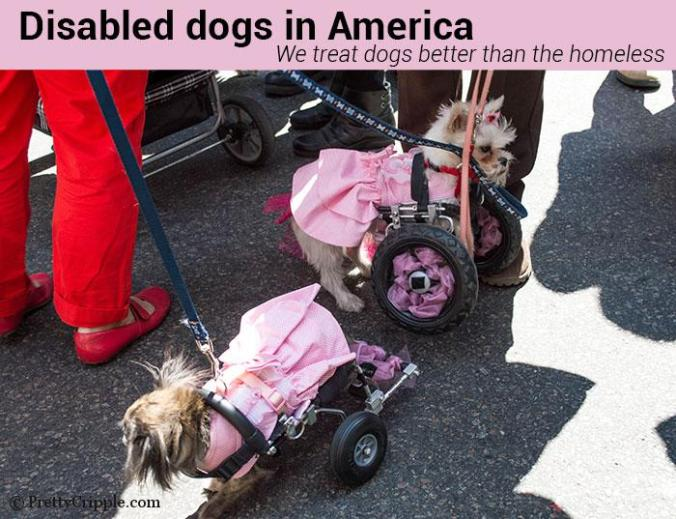 Disabled dogs in America. We treat dogs better than the homeless