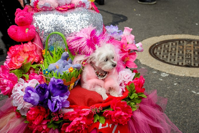 dog at the ny easter hat parade