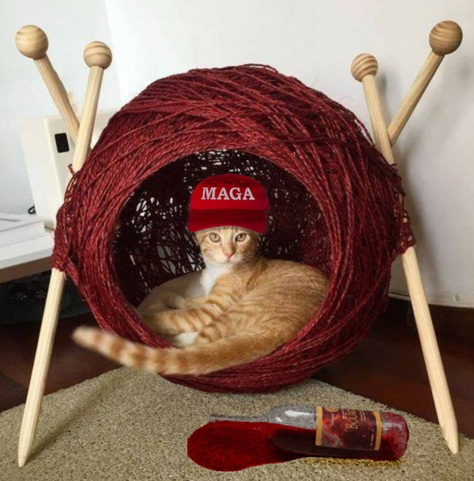 Cat wearing a MAGA baseball hat.