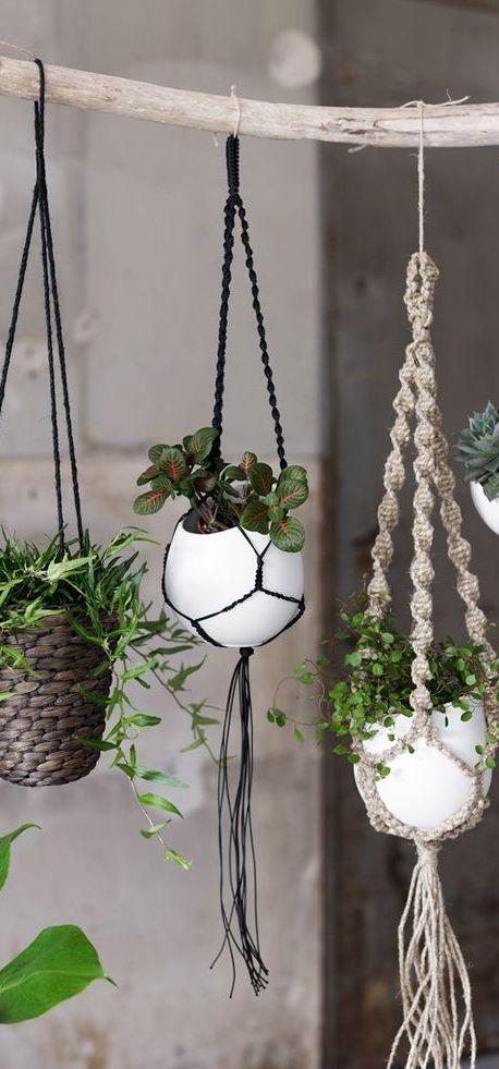 20 Ideas colgantes plantador de Inicio