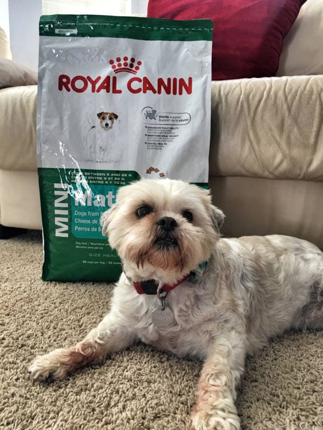 Making Dreams Come True: Win a Scholarship to Veterinarian Camp for Teens and Tweens: Royal Canin - Shortstop