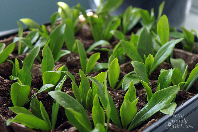How to Root Plant Clippings