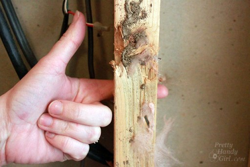 Termite Damage: How to Spot a Termite Infestation and How to Protect Your Home form Termites