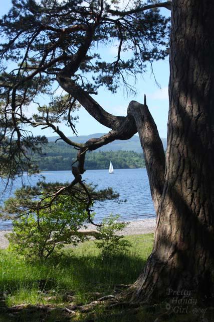 sailboat_in_tree_frame