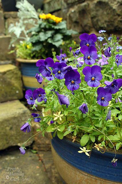 violets_doorstep